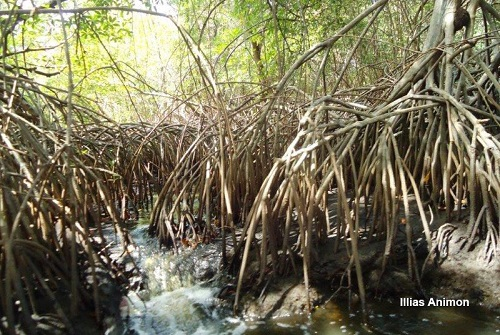 Nariva Swamp Managed Resource Protected Area