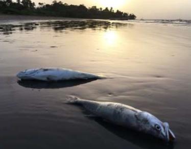 Fish kill or Fish dump? You decide.