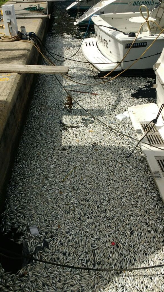 FFOS responds to IMA: Bait Dump vs. Fish Kill in Chaguaramas